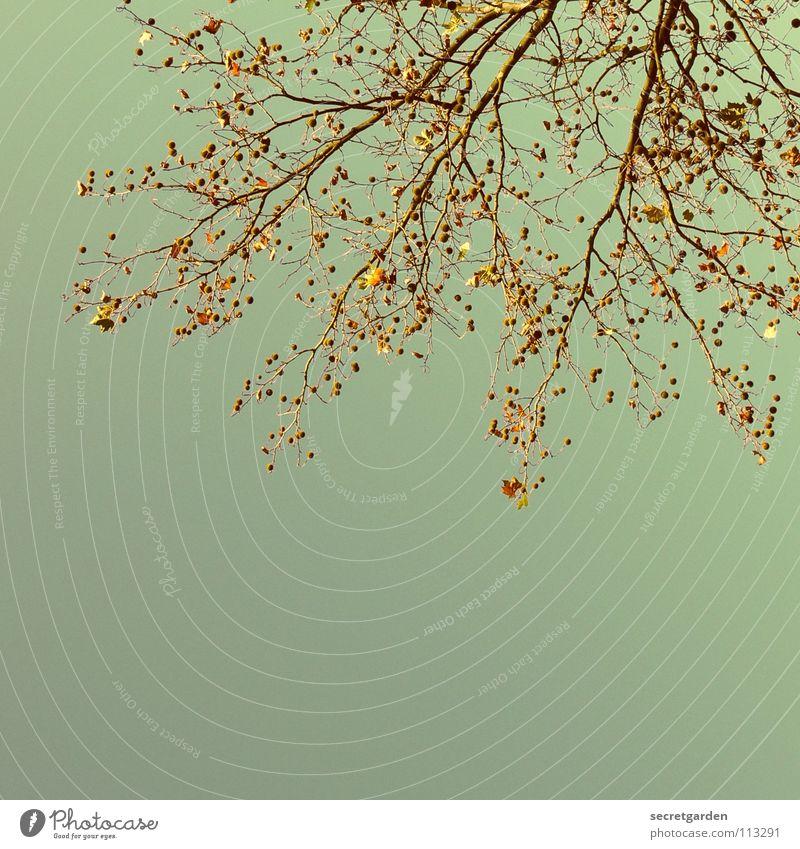 tanzendes licht laublos Sträucher Baum Froschperspektive Herbst Winter Gegenlicht Park trist rein verzweigt Verfall verfallen Trauer Vergänglichkeit Natur Holz