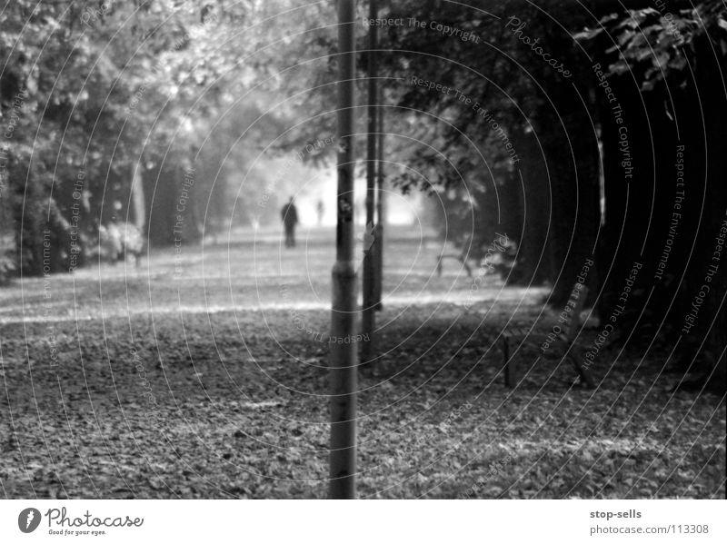 Getrennt Mensch Baum ruhig Blatt Einsamkeit Ferne Herbst grau Traurigkeit klein gehen laufen leer trist Bank Spaziergang