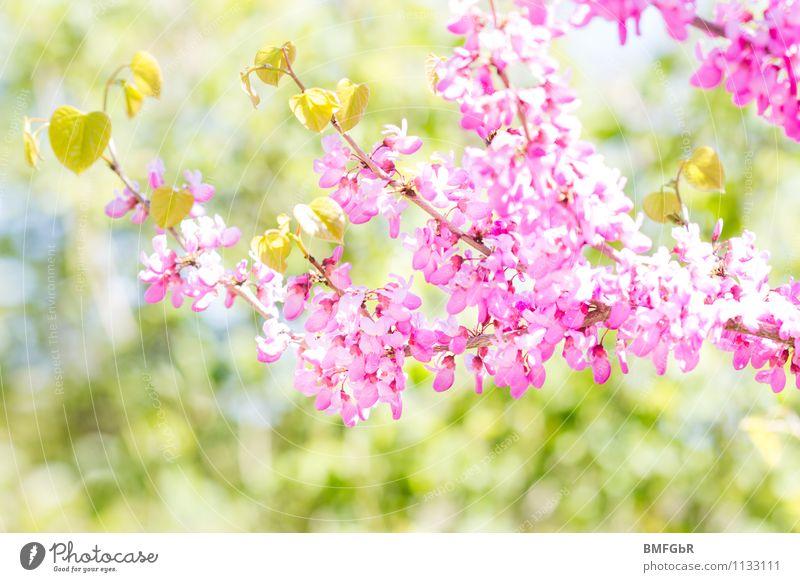 In Barbies Garten Umwelt Natur Landschaft Pflanze Tier Frühling Schönes Wetter Baum Blatt Blüte Park ästhetisch Duft frisch hell schön natürlich grün rosa Glück