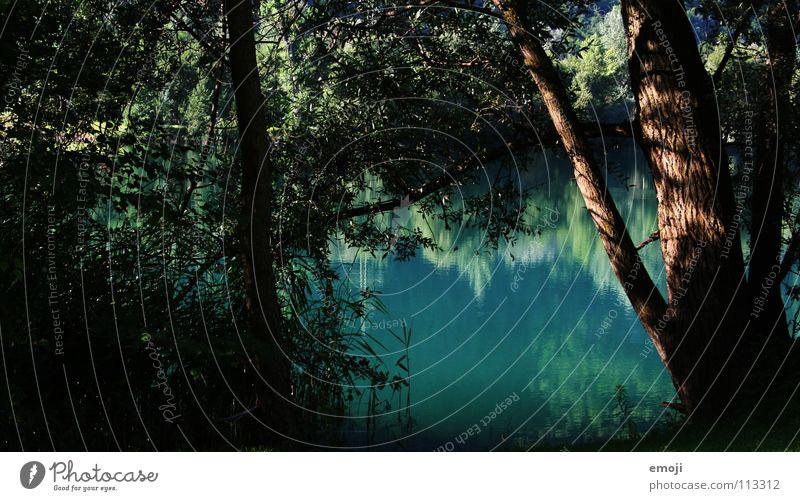 morgens am Seeufer Natur Wasser schön Baum grün blau Pflanze Sommer ruhig Einsamkeit Farbe springen Frühling Stimmung Sträucher