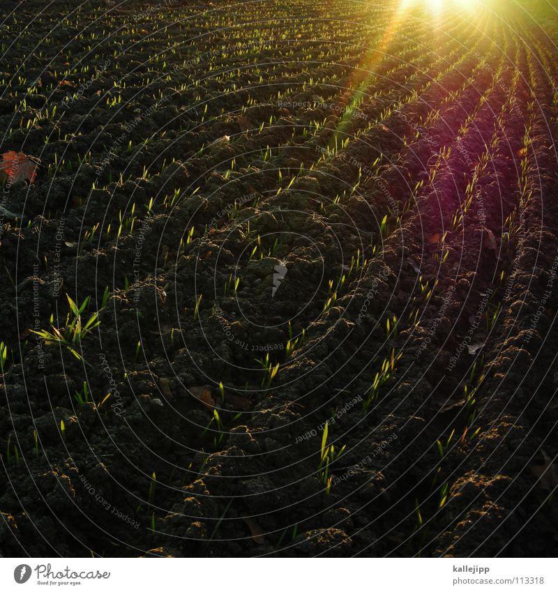 saatgut alles gut Feld lockern pflügen Pflug Spuren Fußspur Silhouette Arbeit & Erwerbstätigkeit Landwirtschaft lesen Motor Kolchose fruchtbar Ackerboden Besitz