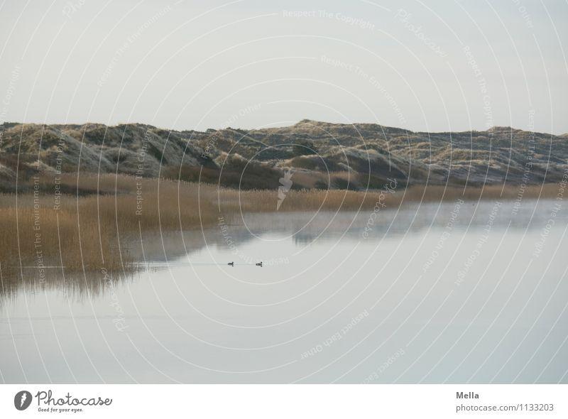 Früh Umwelt Natur Landschaft Wasser Himmel Schilfrohr Hügel Küste Seeufer Teich Düne kalt natürlich Erholung Idylle ruhig Stimmung Morgen Farbfoto Außenaufnahme