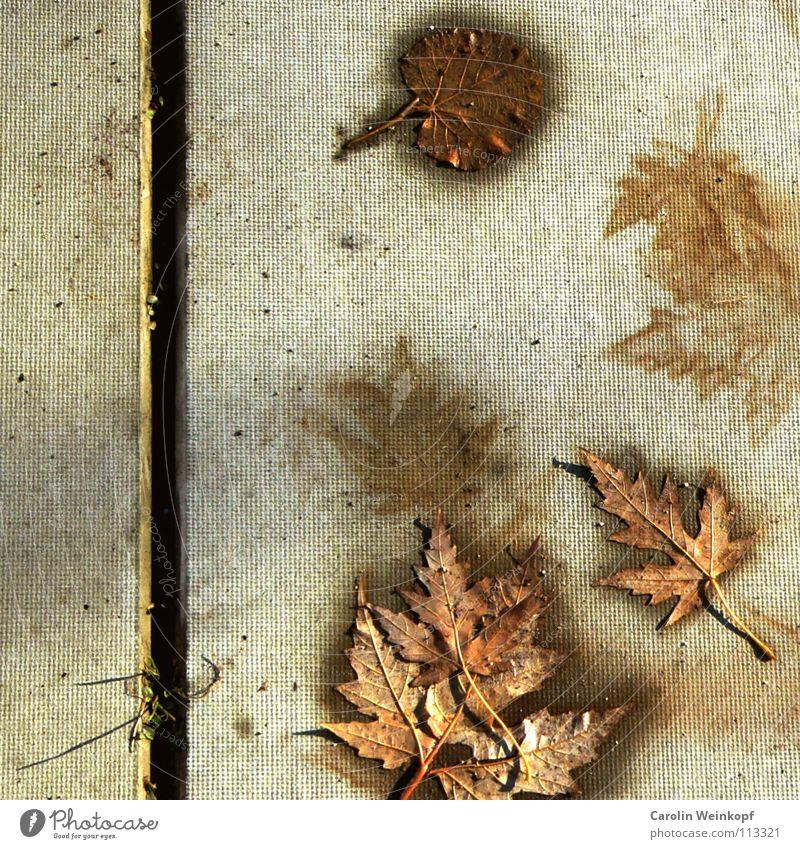 Sein und Schein VII Blatt Oberfläche Beton Fuge Furche Herbst Jahreszeiten Zeit Vergänglichkeit Leben feucht Gras Halm dreckig flach Silhouette Ahorn