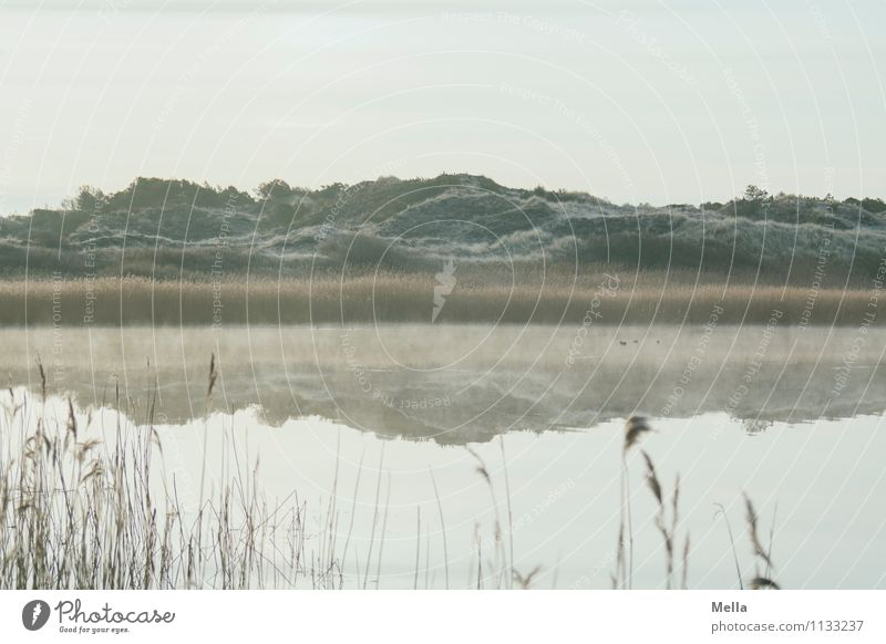 Morgens um sieben in Dänemark Umwelt Natur Landschaft Urelemente Wasser Winter Klima Nebel Eis Frost Gras Schilfrohr Hügel Küste Seeufer Bucht Teich Biotop Düne