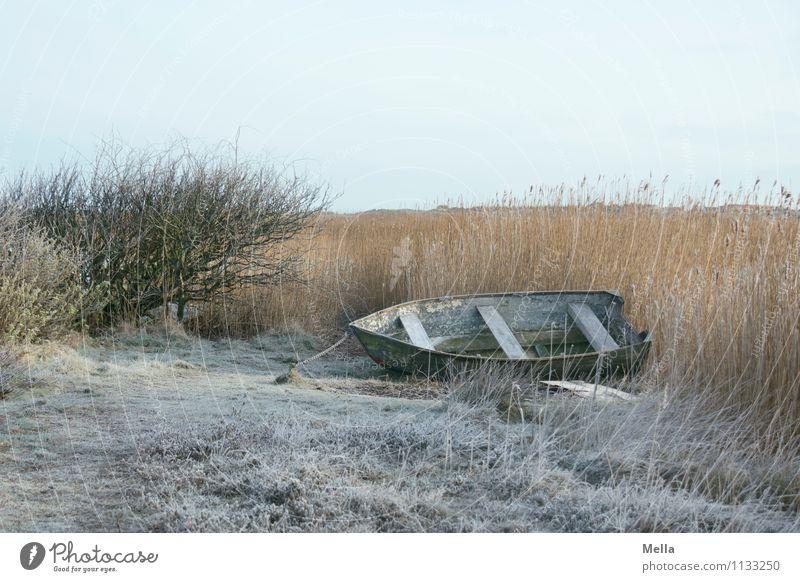 Winterschlaf Angeln Umwelt Natur Landschaft Eis Frost Gras Schilfrohr Seeufer Teich Ruderboot Wasserfahrzeug liegen kalt Stimmung ruhig Einsamkeit Idylle Pause