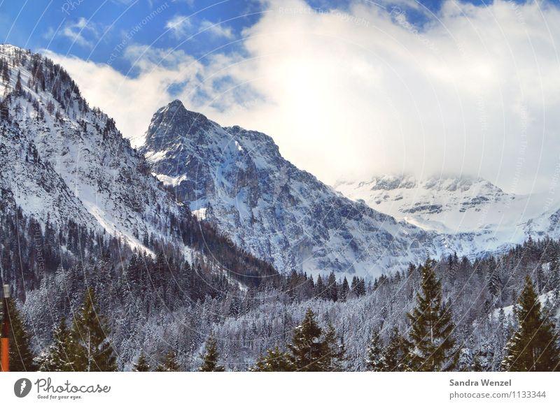 Winter in Kärnten Himmel Natur Ferien & Urlaub & Reisen Pflanze Baum Landschaft Wolken Tier Wald Berge u. Gebirge Umwelt Schnee Horizont Tourismus Klima