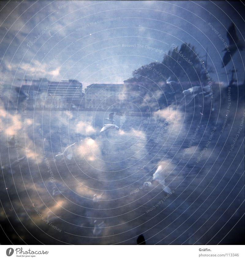 Himmel mit Möwen Himmel blau Wolken Vogel fliegen Hamburg Holga Möwe durcheinander Doppelbelichtung Schwan Alster Ausflugsziel Binnenalster Vögel füttern