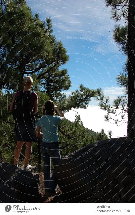 Lichtblick Frau Himmel Baum Sonne Wolken Ferne Wald wandern Pause Aussicht Freizeit & Hobby Baumstamm blenden Momentaufnahme Kiefer Nadelbaum