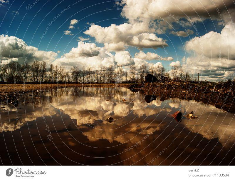 Bodensee Umwelt Natur Landschaft Himmel Wolken Horizont Schönes Wetter Baum Sträucher Pfütze Teich unten Idylle Windstille ruhig bodennah Froschperspektive