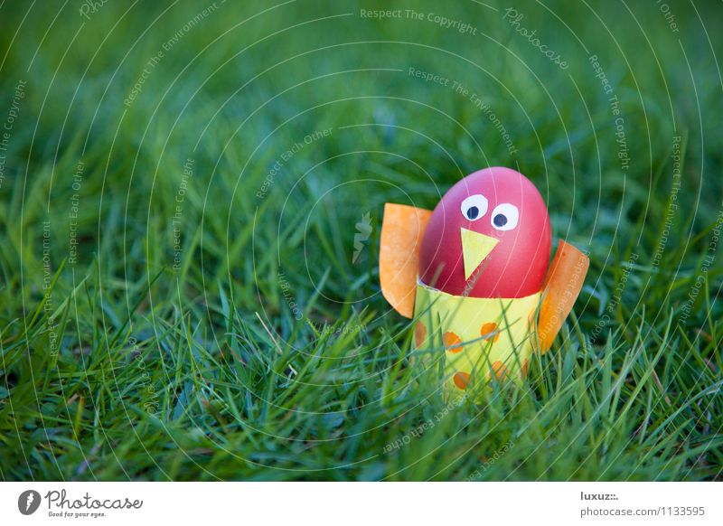 Oster Vogel Frühling Freude Idee Dekoration & Verzierung Ei Rasen Hintergrund neutral