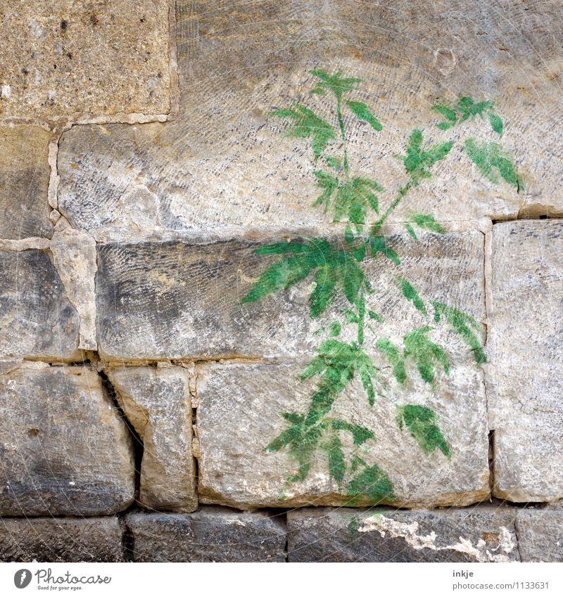Mauerblümchen Pflanze Grünpflanze Hanf Cannabisblatt Hanfpflanze Wand Steinmauer Dekoration & Verzierung Ornament Graffiti grün Gefühle Stimmung Stadt Verbote