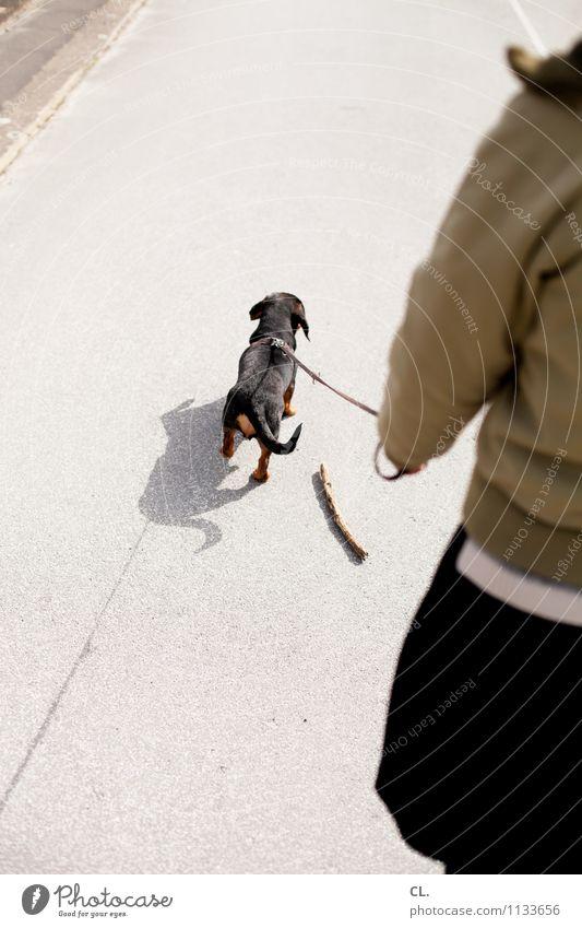 stöckchenvergesser Hund Mensch Frau Tier Erwachsene Leben Straße Bewegung feminin Wege & Pfade gehen Zusammensein Freundschaft Freizeit & Hobby Schönes Wetter Verkehrswege