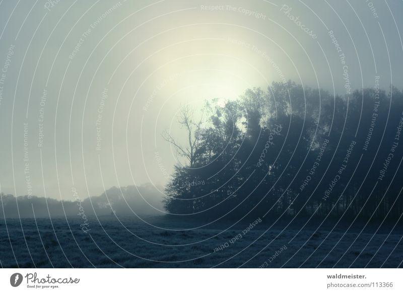Morgennebel Nebel Baum Wald Wiese Feld Wolken Herbst kalt Romantik Sonne Morgendämmerung Müritz-Nationalpark Traurigkeit
