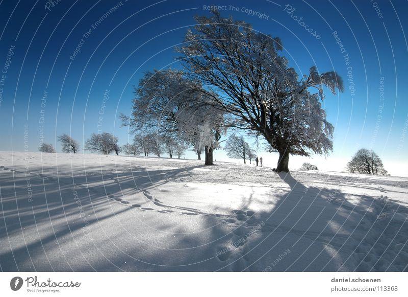Weihnachtskarte 14 Himmel Natur Ferien & Urlaub & Reisen blau weiß Sonne Baum Einsamkeit Winter kalt Berge u. Gebirge Schnee Hintergrundbild Deutschland