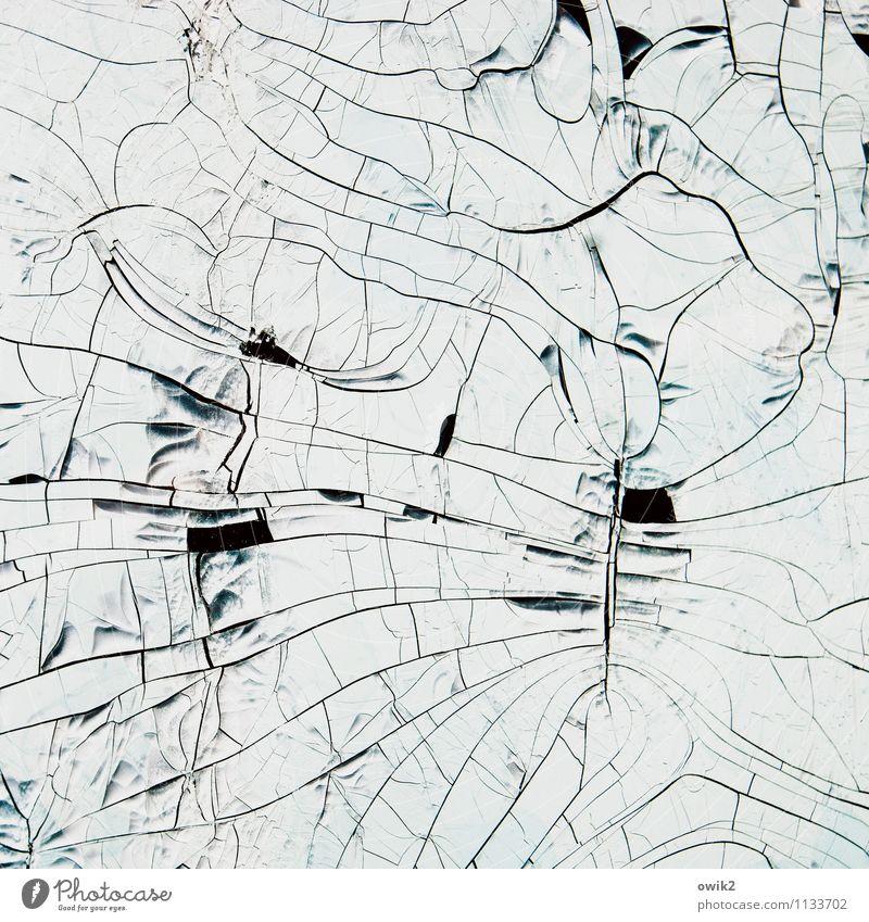 Interface Kunst Kunstwerk alt dehydrieren klein nah trist trocken verrückt Rätsel Verfall Vergänglichkeit verlieren Irritation Wandel & Veränderung Zerstörung