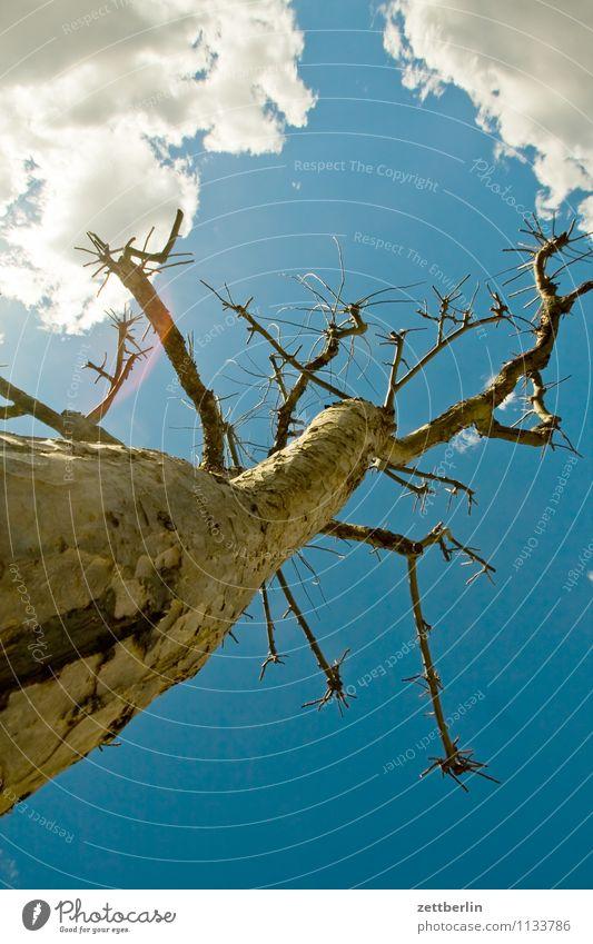 Apfelbaum Baum Obstbaum Baumstamm Ast Himmel Blauer Himmel himmelblau Wolken Sonne Sonnenstrahlen hell Frühling Textfreiraum Baumrinde Blütenknospen Blattknospe