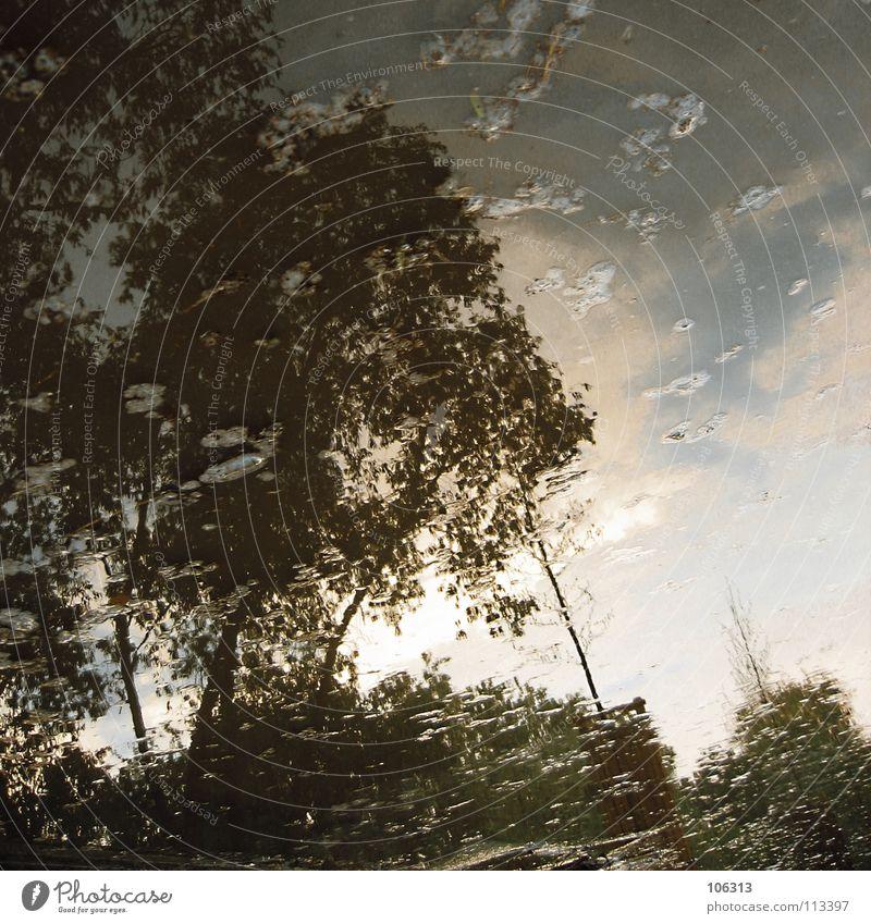 MY SPACE Himmel Natur Wasser Baum Sommer Haus Wald Erholung Ferne Umwelt Wiese Gefühle See Lampe träumen Linie