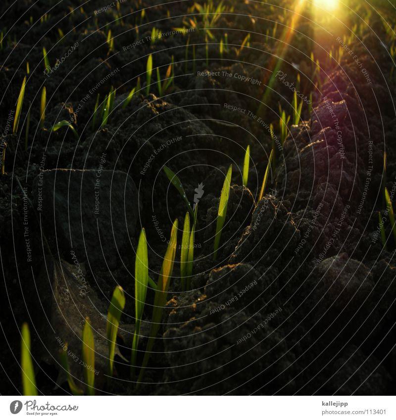 ernten was wir sehen Freude Wege & Pfade Erde Arbeit & Erwerbstätigkeit Feld Zukunft Bodenbelag lesen Ziel Spuren Landwirtschaft Gastronomie Fußspur drehen