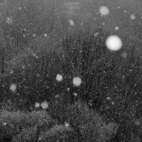 April Natur Baum Landschaft ruhig kalt Umwelt Schnee Hintergrundbild Schneefall Wetter Klima Textfreiraum Schönes Wetter fallen Klimawandel Schneeflocke