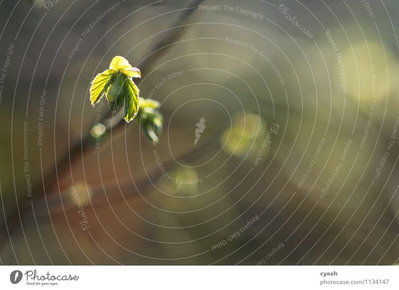 Frühlingserwachen Natur Pflanze grün Baum Blatt ruhig Wärme Leben Zeit braun Wachstum leuchten frisch Kraft Energie
