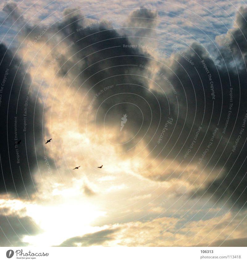 SEX IN THE CLOUDS [VÖGELN] Himmel Wolken Vogel fliegen mehrere viele Romantik bedecken Süden Endzeitstimmung Lichteinfall Fortpflanzung Apokalypse