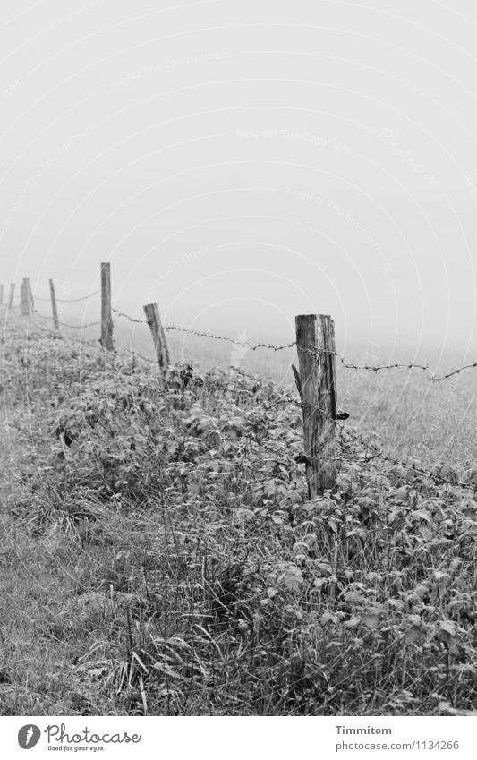 Karl in Gedanken. Umwelt Natur Landschaft Himmel Winter Wetter Nebel Pflanze Gras Wiese Hügel Pfosten Stacheldrahtzaun Zaun Holz Metall Denken Blick einfach