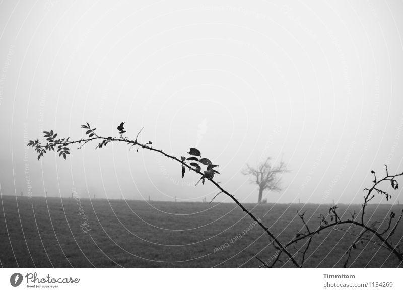 Jump and run. Himmel Natur Pflanze Baum Landschaft dunkel schwarz Umwelt Gefühle Wiese natürlich grau Wachstum Nebel Schmerz kahl