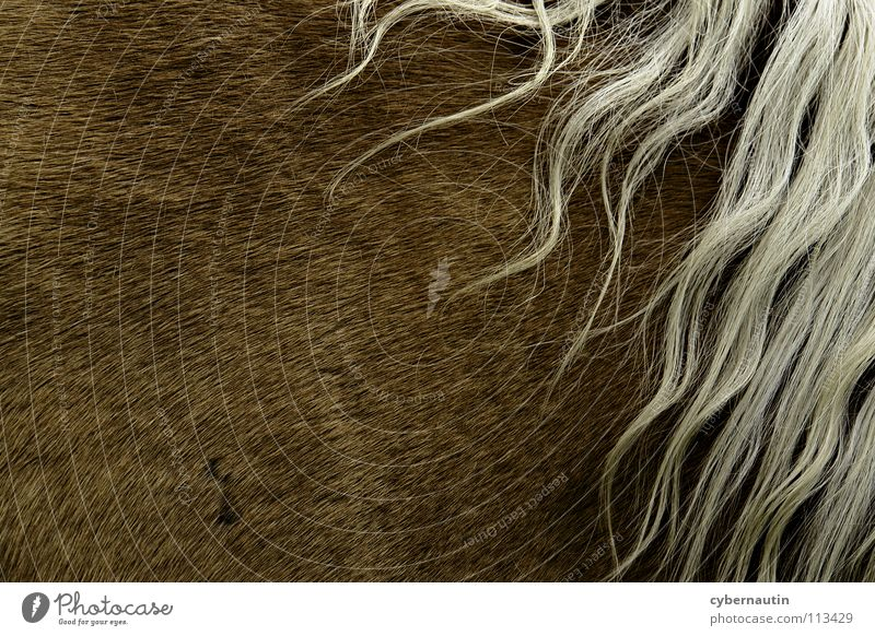 Mähne Pferd Fell braun weiß Haare & Frisuren Rosshaar Abstraktion Detailaufnahme Strukturen & Formen