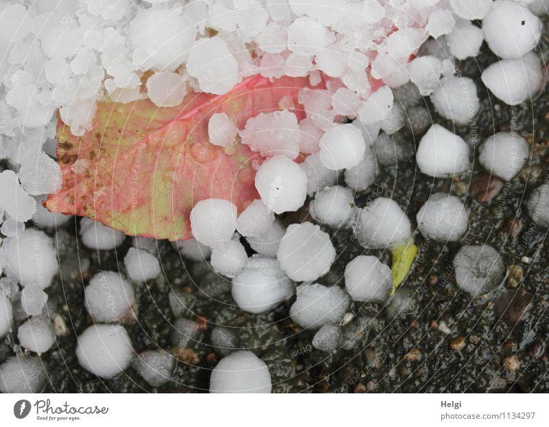 Aprilwetter... Natur Pflanze grün weiß Blatt kalt Umwelt Frühling natürlich Wege & Pfade grau außergewöhnlich rosa liegen authentisch nass