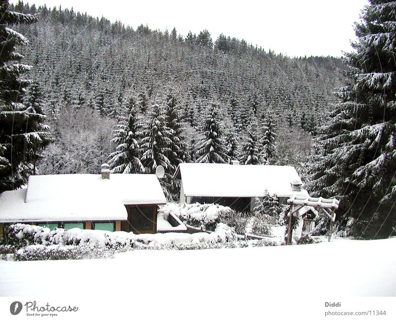 Winterwald Baum Haus kalt Schnee Berge u. Gebirge Ast