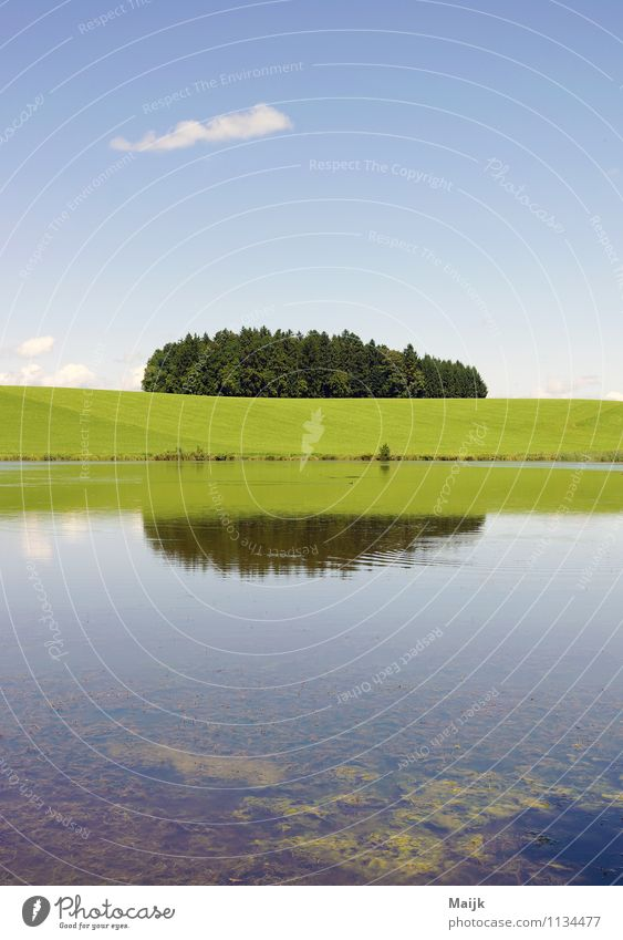 Fischkrieg Umwelt Natur Landschaft Tier Erde Luft Wasser Himmel Wolken Horizont Sommer Klima Wetter Schönes Wetter Baum Gras Sträucher Grünpflanze Wiese Feld