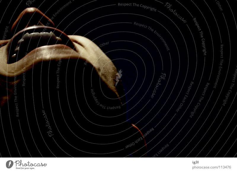 vampir sucht zahnspange Vampir saugen attackieren Nacht Mondschein spät Mitternacht Fabelwesen Erzählung Filmindustrie Zauberei u. Magie Schwarze Magie