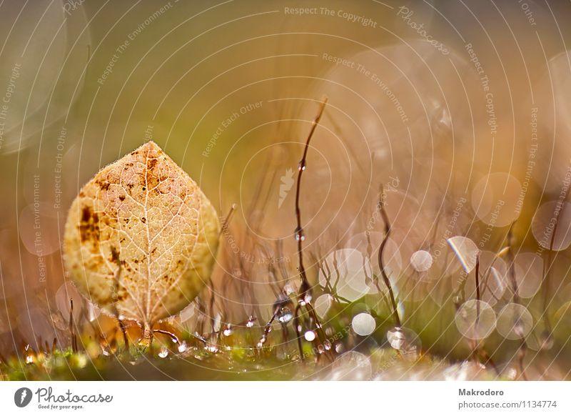 Mooslandschaft Natur Gefühle Garten Stimmung Lebensfreude Warmherzigkeit Romantik