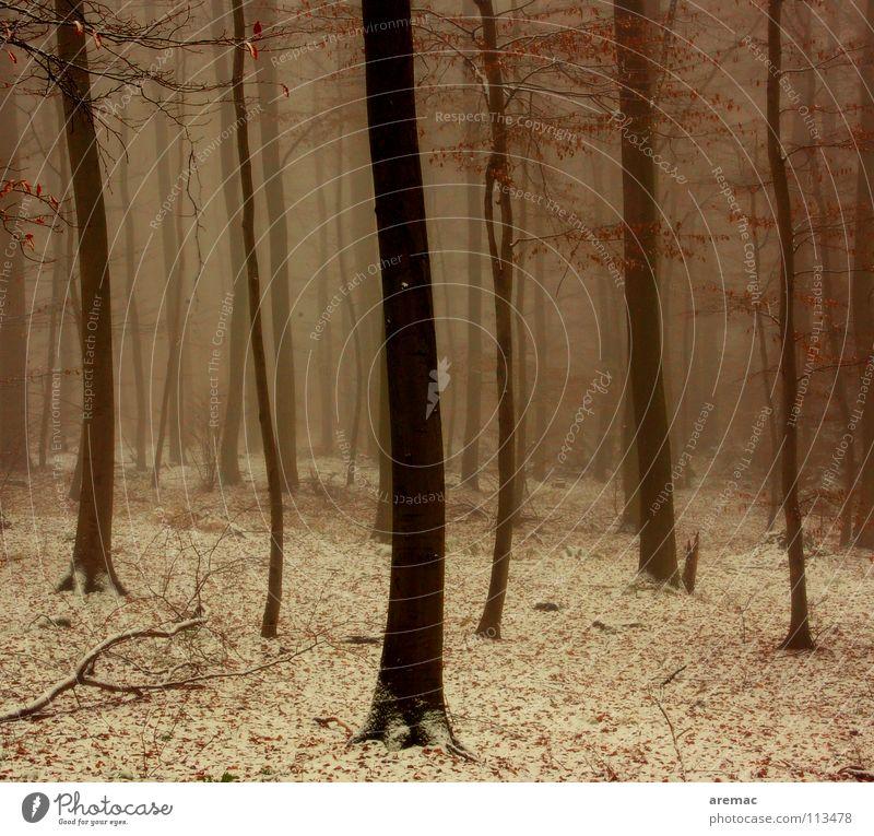 Nebelwald Baum Winter Wald kalt Schnee Deutschland Nebel Heidelberg Königsstuhl
