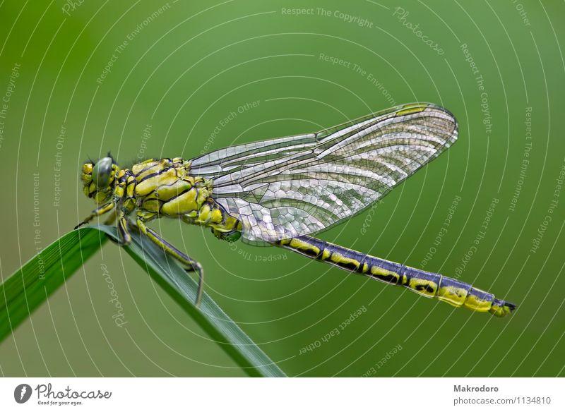 Libelle im Sonnenbad Tier Wildtier 1 Freiheit Natur Flügelflieger Glanzlicht Farbfoto Außenaufnahme Nahaufnahme Makroaufnahme Morgen Schwache Tiefenschärfe