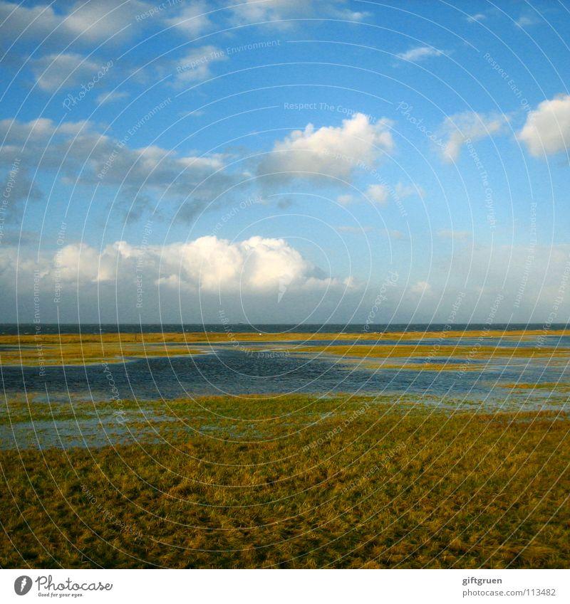 herbstlandschaft III Natur Himmel Meer Strand Wolken Herbst Wiese Gras Landschaft Küste Vergänglichkeit Jahreszeiten Nordsee November Oktober schlechtes Wetter