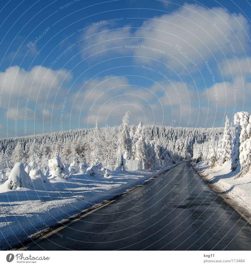Märchenhaft III Himmel schön weiß Baum Freude Winter Wald kalt Graffiti Schnee Stimmung Beginn Ziel Hütte Ende Schweiz