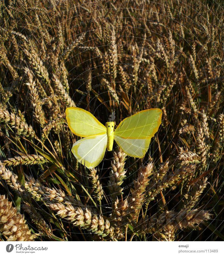 Määädschen ... Schmetterling gelb Farbfleck Fleck Tier mädchenhaft Kornfeld Feld Weizen Weizenfeld Mitte Frühling Sommer springen Fröhlichkeit süß falsch