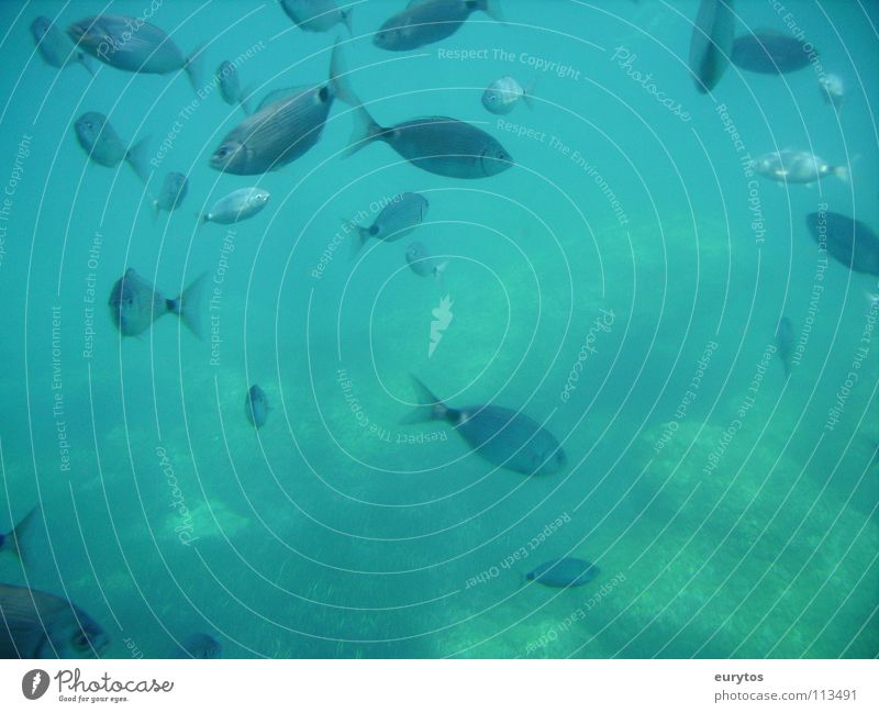 eat-sleep-go fishing...2 Fischschwarm Meer Unterwasseraufnahme Mittelmeer tyrkis