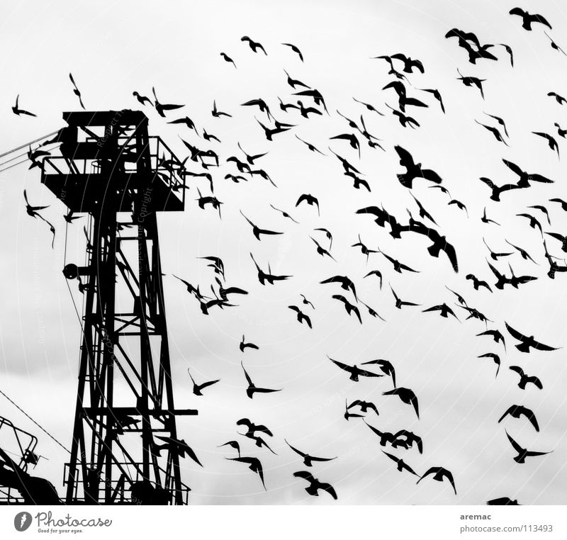Tiefflug weiß schwarz Vogel Luftverkehr Flügel Hafen Kran Schwarm