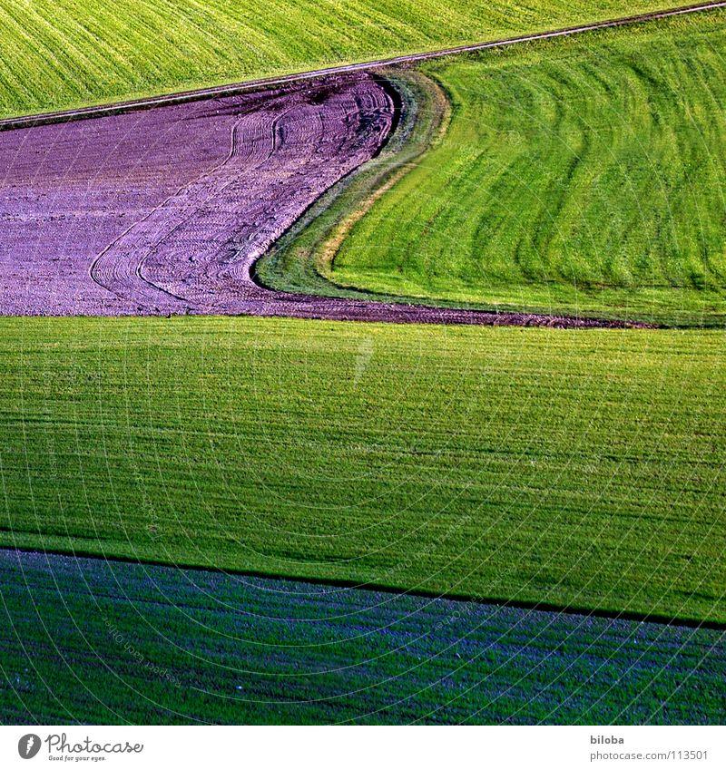 Art of farming Natur grün Pflanze Leben Herbst Linie Feld Wellen Kunst Hintergrundbild Lebensmittel frisch Bodenbelag Gastronomie Getreide Landwirtschaft