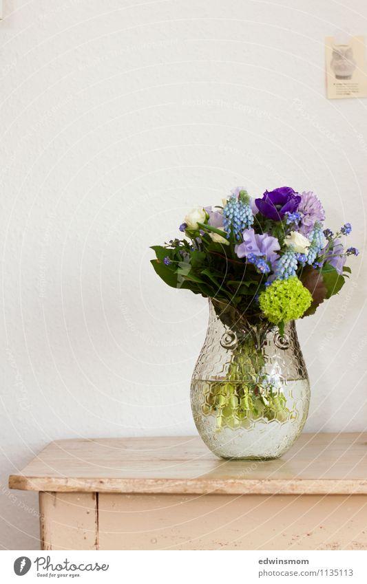 Geburtstagsgeschenk Natur blau Pflanze schön grün Blume Blatt Frühling Blüte feminin Häusliches Leben Dekoration & Verzierung elegant stehen Blühend einzigartig