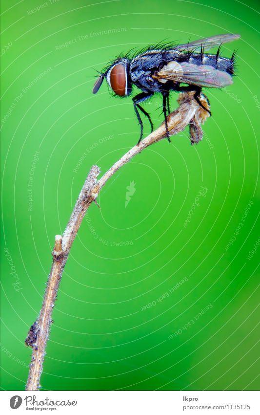 ein schwarzes kleines Fliegelement Garten Natur Blatt Weiche Behaarung Pfote Linie wild braun gelb grau weiß Holz Flügel Auge haarig Insekt Ast geneigt