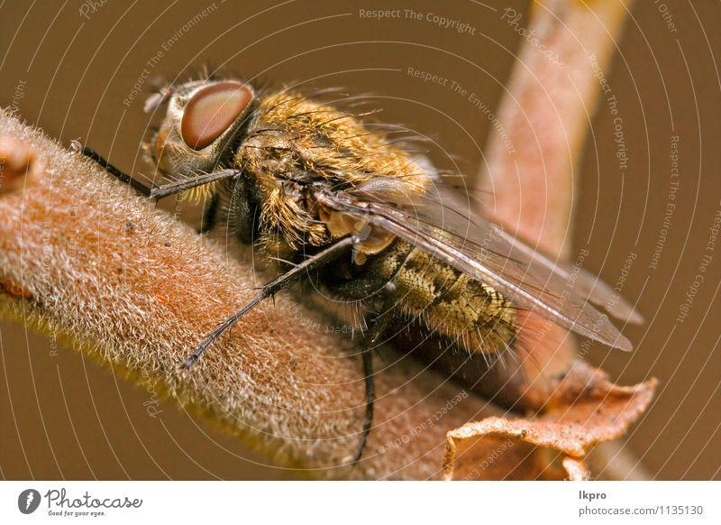 in einem Ast fliegen Garten Natur Blatt Weiche Behaarung Pfote Linie wild braun gelb grau schwarz weiß Fliege Holz Flügel Auge haarig Insekt geneigt angewinkelt