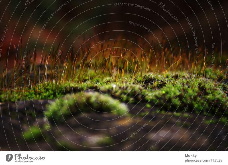 Haarige Angelegenheit schwarz braun grün gelb Haarsträhne aufsteigen streben Herbst kalt Winter Nieselregen Makroaufnahme Hintergrundbild Unschärfe Stein