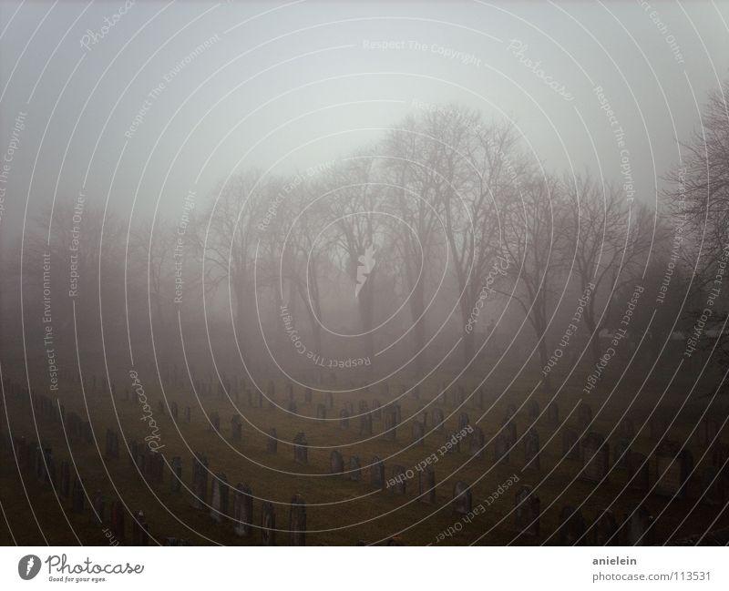in reih und glied alt Baum dunkel Tod grau Stein Traurigkeit Mauer Nebel Wetter Trauer verfallen Reihe historisch Friedhof Kastanienbaum