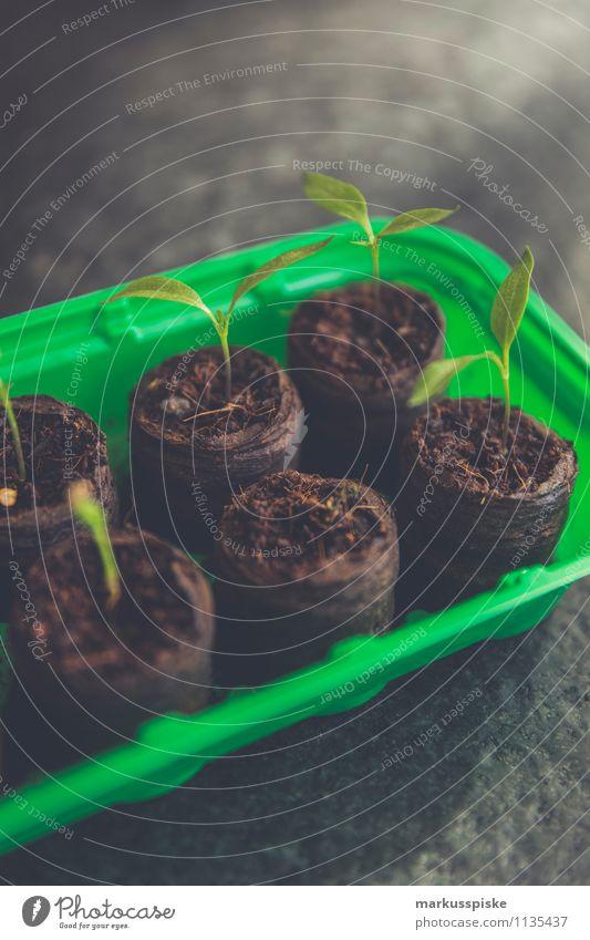 tomaten aufzucht urban gardening Lebensmittel Gemüse Salat Salatbeilage Tomate Ernährung Bioprodukte Vegetarische Ernährung Diät Lifestyle Freude
