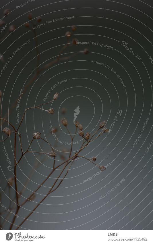 Zarte Zweige Natur grau getrocknet Blütenknospen Gräserblüte Gras Trauer Abschied Allerheiligen Tod beige neutral zart fein zerbrechlich verwundbar