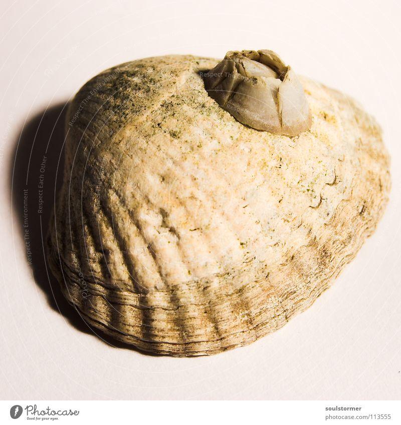 Meeresfrüchte weiß Strand Tier Auge Tod klein Sand See Angst Lebensmittel Design Geschwindigkeit gefährlich Ernährung Fisch