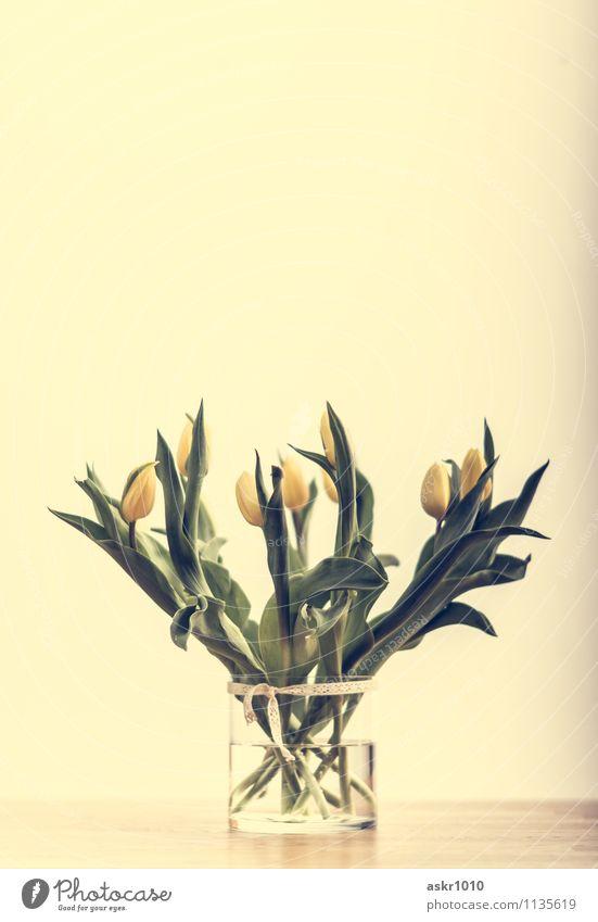tuLips Pflanze grün Wasser Blume Blatt gelb Innenarchitektur Blüte Stil Holz Lifestyle Wohnung Raum Häusliches Leben Design Dekoration & Verzierung